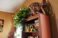 Mature Pothos like this look great on top of book shelves.