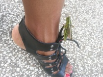The grasshopper who loved me....